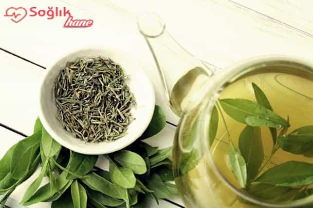 Yeşil Çayın Faydaları Nelerdir - Yeşil Çay Zayıflatır mı